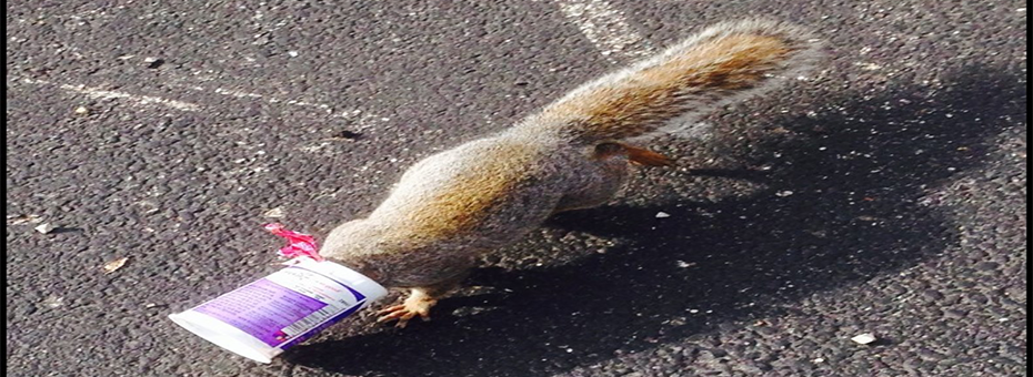 """How Accounting """"Squirrels"""" Can Ferret Out Waste"""